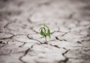 resilience-renetrecoaching
